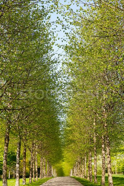 Steegje voorjaar tijd boom vers groene bladeren Stockfoto © bigandt