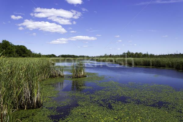 説明 水 自然 緑 池 ストックフォト © bigjohn36