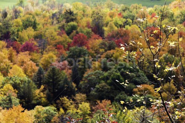 カラフル 木 秋 葉 背景 美 ストックフォト © bigjohn36