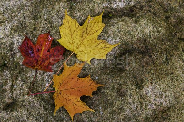 клен рок природы оранжевый осень золото Сток-фото © bigjohn36