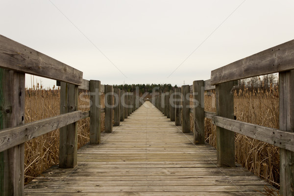 Boardwalk over a marsh Stock photo © bigjohn36