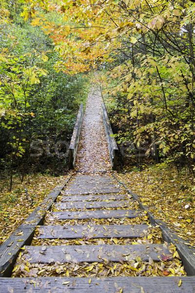 木製 手順 歩道 森林 自然 背景 ストックフォト © bigjohn36