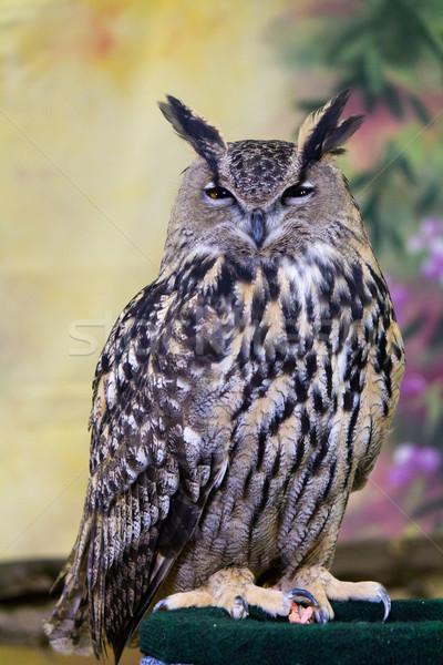 глаза глазах Перу птиц животного портретов Сток-фото © bigjohn36