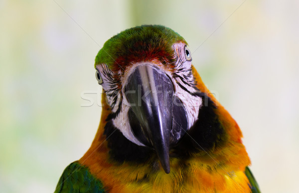 нет описание птица цвета тропические животного Сток-фото © bigjohn36