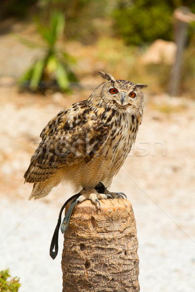 Eagle owl oiseau vert animaux post prairie Photo stock © BigKnell