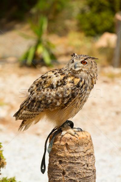 Oehoe post naar vogel groene dier Stockfoto © BigKnell