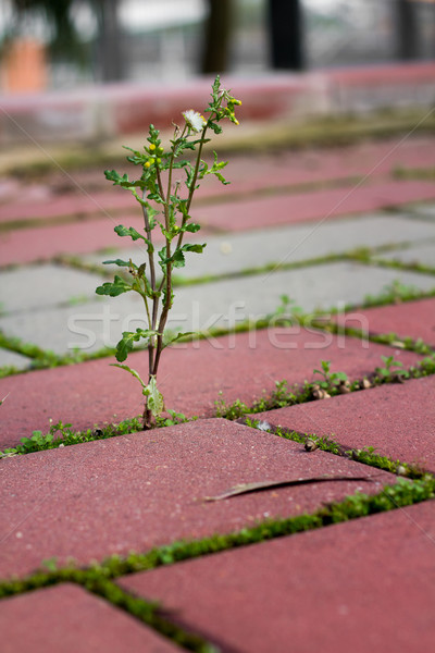 Weeds growing Stock photo © BigKnell
