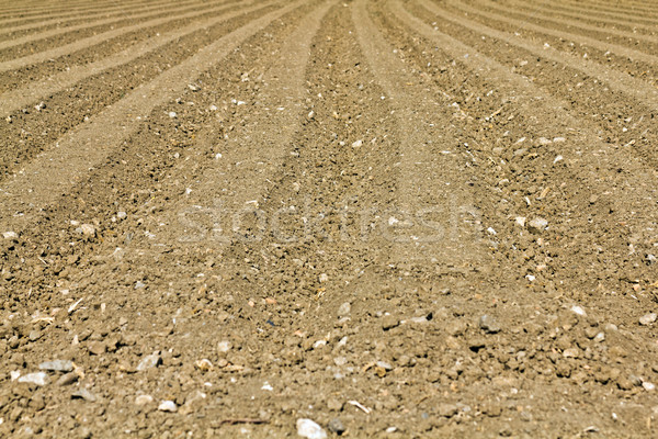 Ploughed field Stock photo © BigKnell