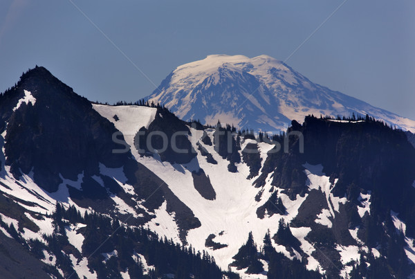 Mount Adams from Sunrise Mount Rainier Stock photo © billperry
