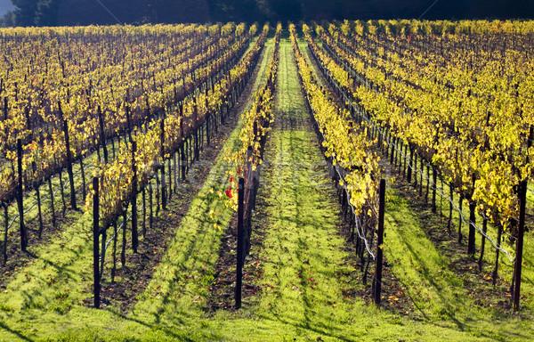 Amarillo vides caída hierba verde California hojas Foto stock © billperry