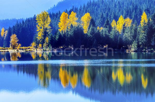 Niebieski wody drzew złota jezioro jesienią Zdjęcia stock © billperry