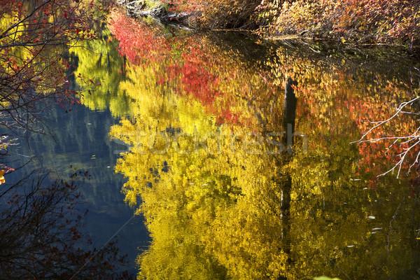 Fall Colors Close Up Wenatchee River Stevens Pass Leavenworth Wa Stock photo © billperry