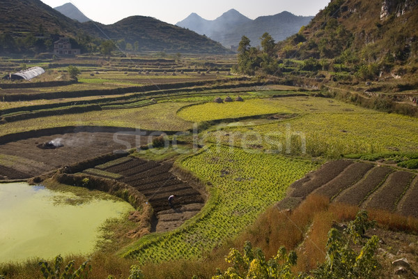 Kínai paraszt dolgozik mezők Kína zöld Stock fotó © billperry