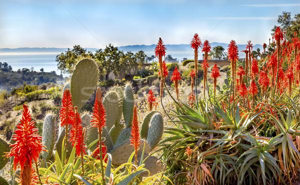 Stockfoto: Peer · oranje · aloë · cactus · ochtend · oceaan