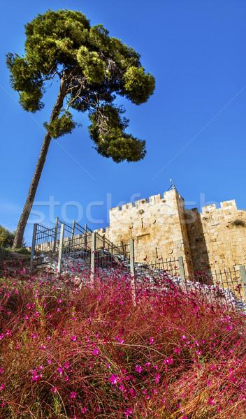 Pembe çiçekler şehir duvarlar kapı Kudüs Stok fotoğraf © billperry