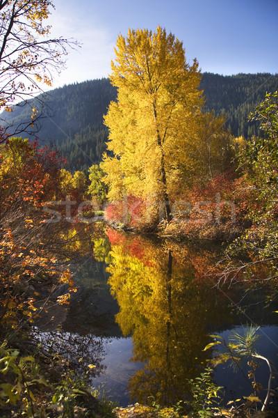 реке Вашингтон фон деревья Сток-фото © billperry