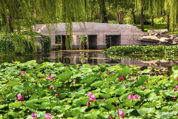 Lotus bahçe yansıma köprü söğüt ağaçlar Stok fotoğraf © billperry