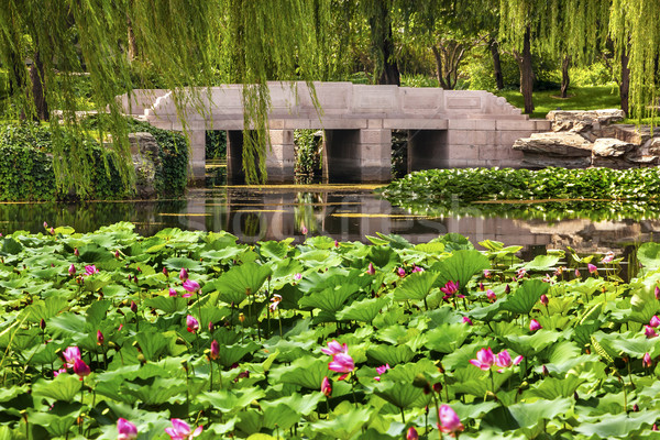 Lotus Garden Reflection Bridge Willow Trees Summer Palace Beijin Stock photo © billperry