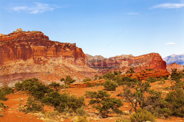 Capitol Reef Sandstone Mountain Capitol Reef National Park Torre Stock photo © billperry