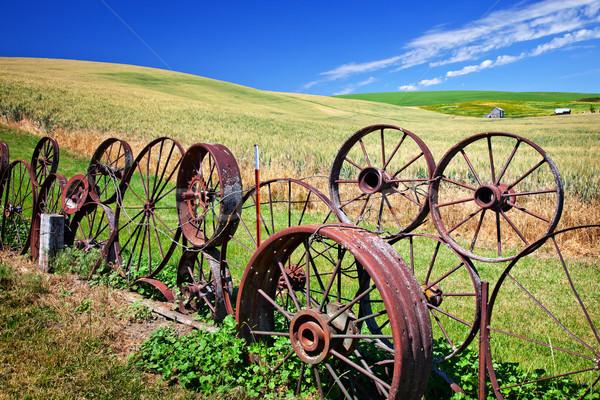 çelik tekerlek çit yeşil buğday çim Stok fotoğraf © billperry