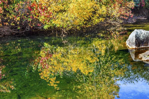 желтый красный листьев зеленый воды Сток-фото © billperry