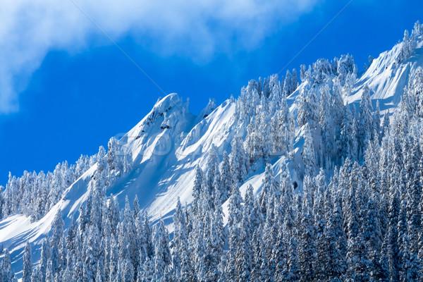 Snowy Trees McClellan Butte Snow Mountain Peak, Snoqualme Pass W Stock photo © billperry