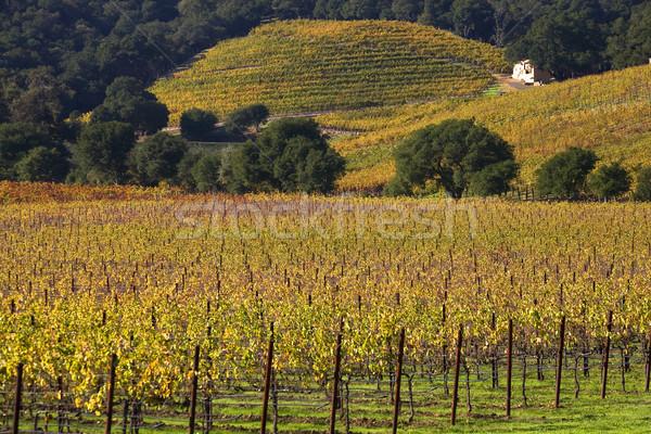 Yellow Vines Leaves Vineyards Fall White Farmhouse Napa Californ Stock photo © billperry