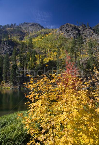 Kolory jesieni żółty górskich jezioro Waszyngton 10 Zdjęcia stock © billperry