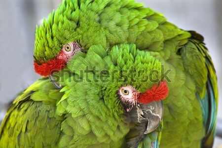 Verde militar dois círculo Foto stock © billperry