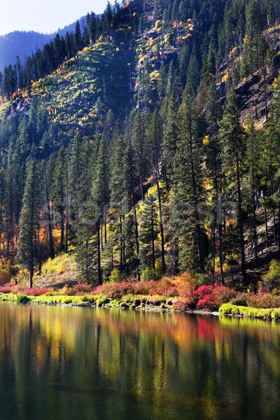 Kolory jesieni rzeki żółty górskich drzew Zdjęcia stock © billperry