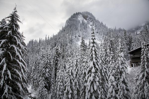 Snow Trees Mountain Ski Lodge Alpental Washington Stock photo © billperry