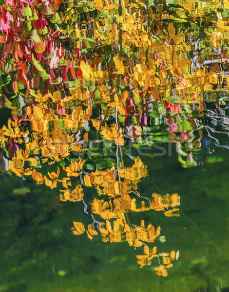 Yellow Leaves Fall Colors Reflection Wenatchee River Valley Near Stock photo © billperry