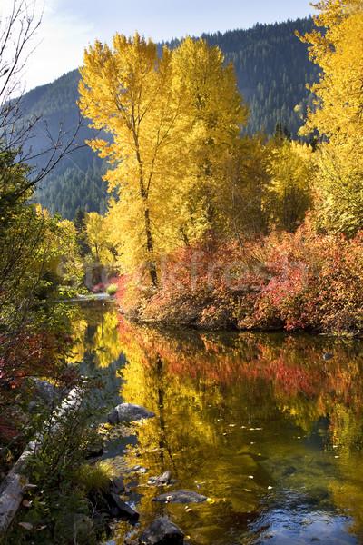 Сток-фото: реке · фон · деревья · оранжевый