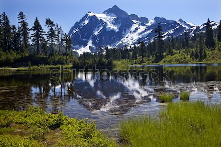 Picture Lake Evergreens Mount Shuksan Washington USA Stock photo © billperry