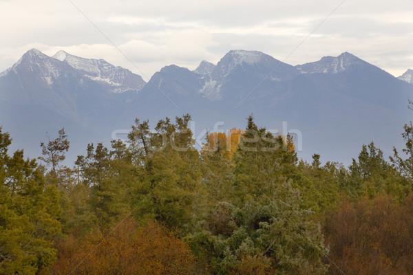 Montagnes couleurs d'automne bison gamme Montana arbre Photo stock © billperry