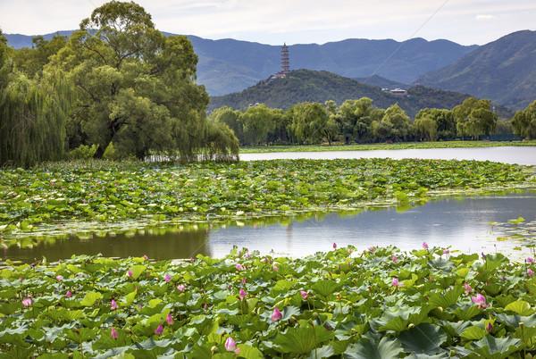 Pagode lotus tuin reflectie zomer paleis Stockfoto © billperry