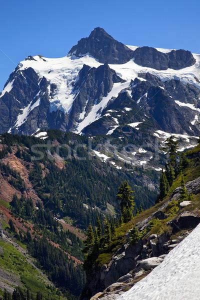 Snow Evergreens Artist Point Mount Shuksan Washington State Stock photo © billperry