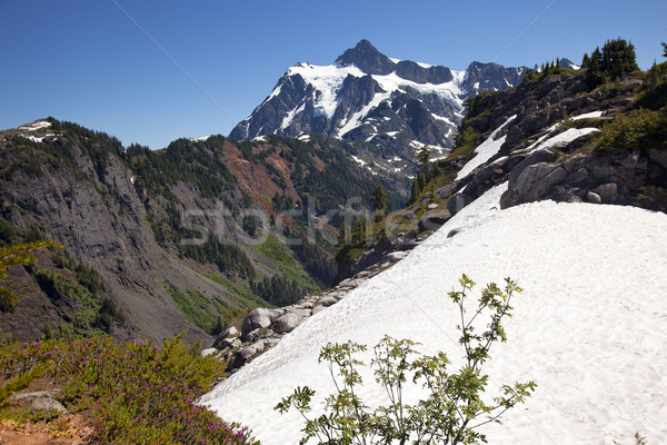 Snowfields Heather Artist Point Mount Shuksan Washington State Stock photo © billperry