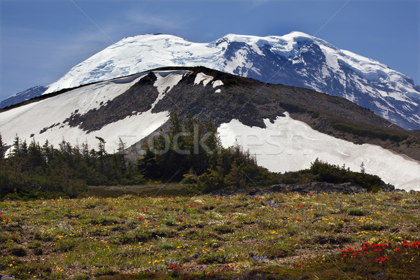 Gündoğumu kır çiçekleri kar dağ Hint boya fırçası Stok fotoğraf © billperry