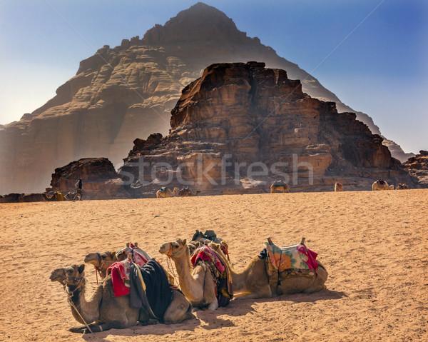 желтый песчаная дюна рок верблюда долины луна Сток-фото © billperry