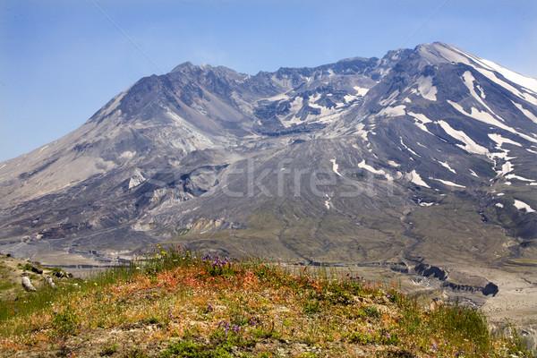 Fleurs sauvages Le Mont Saint Helens parc Washington volcan nature Photo stock © billperry