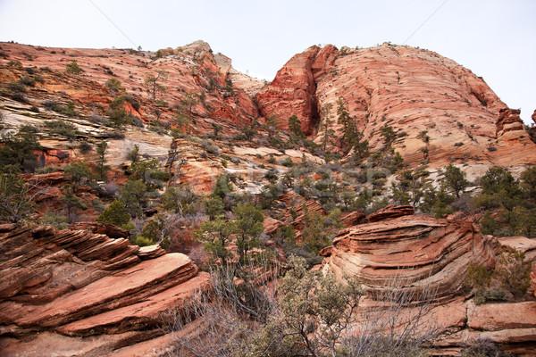 Oranje witte rotsen groene bomen canyon Stockfoto © billperry