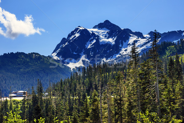 Mount Shuksan Evergreens Mount Baker Ski Area Washington Stock photo © billperry