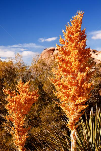 黄色 隠された 谷 砂漠 ツリー 風景 ストックフォト © billperry