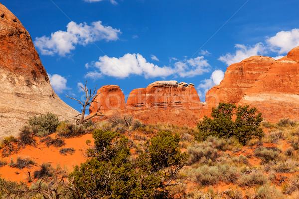 Rock kanion ogród parku Utah USA Zdjęcia stock © billperry