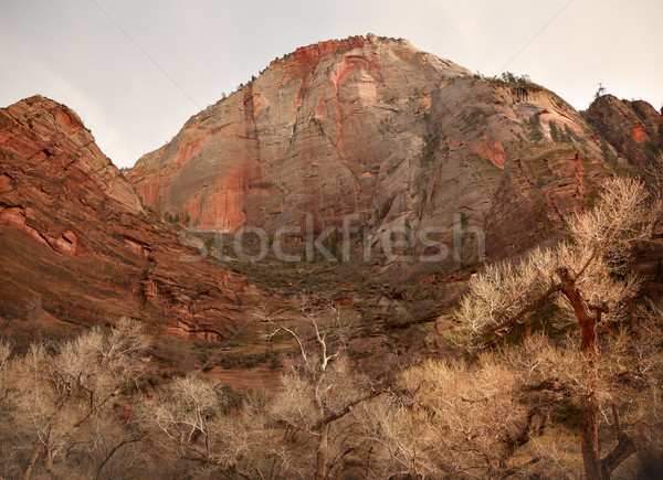 Stock photo: Red Rock Canyon Zion National Park Utah