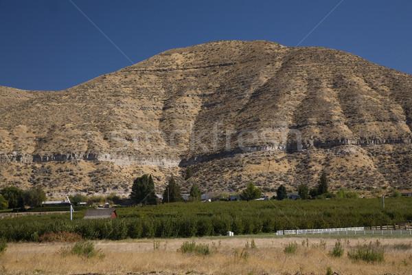 Washington State Apple Farm Yakima Washington Stock photo © billperry