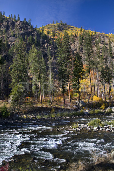 Stock photo: Fall Colors Wenatchee River Yellow Trees Mountain Stevens Pass L