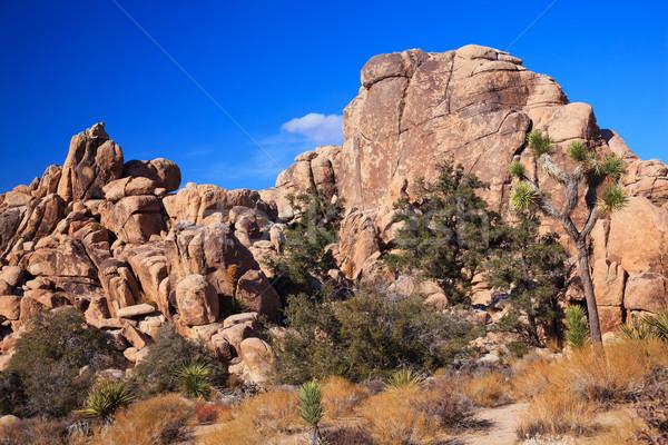 隠された 谷 岩 砂漠 ツリー ビッグ ストックフォト © billperry