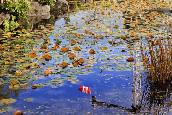 Lily Pads Canadian Flag Leaves Water Reflection Fall Colors Van  Stock photo © billperry